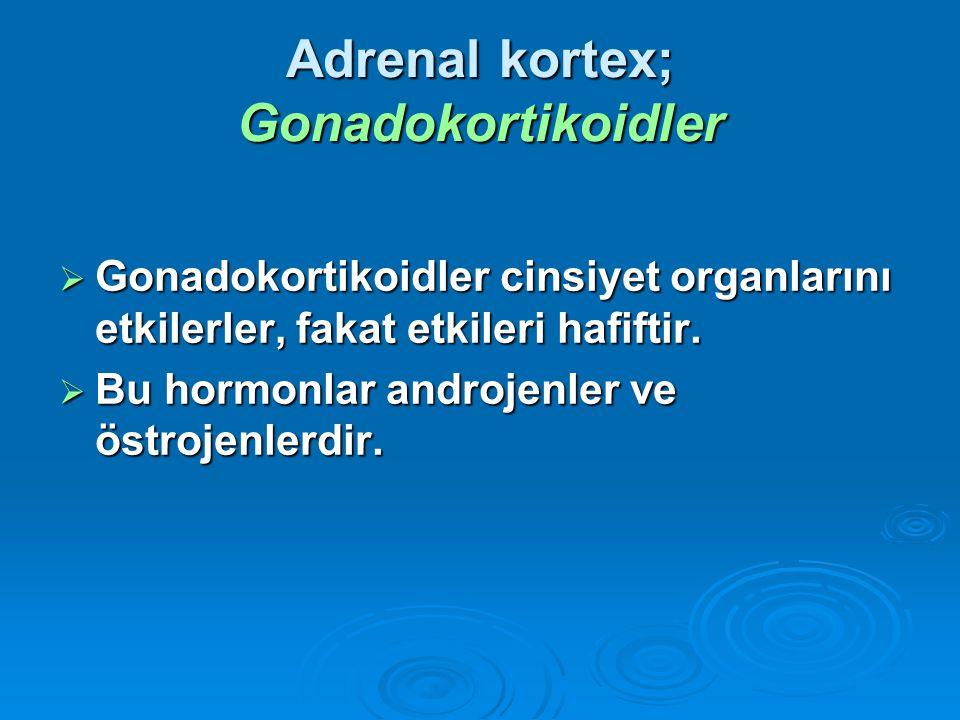  Gonadokortikoidler cinsiyet organlarını etkilerler, fakat etkileri hafiftir.  Bu hormonlar androjenler ve östrojenlerdir. Adrenal kortex; Gonadokor