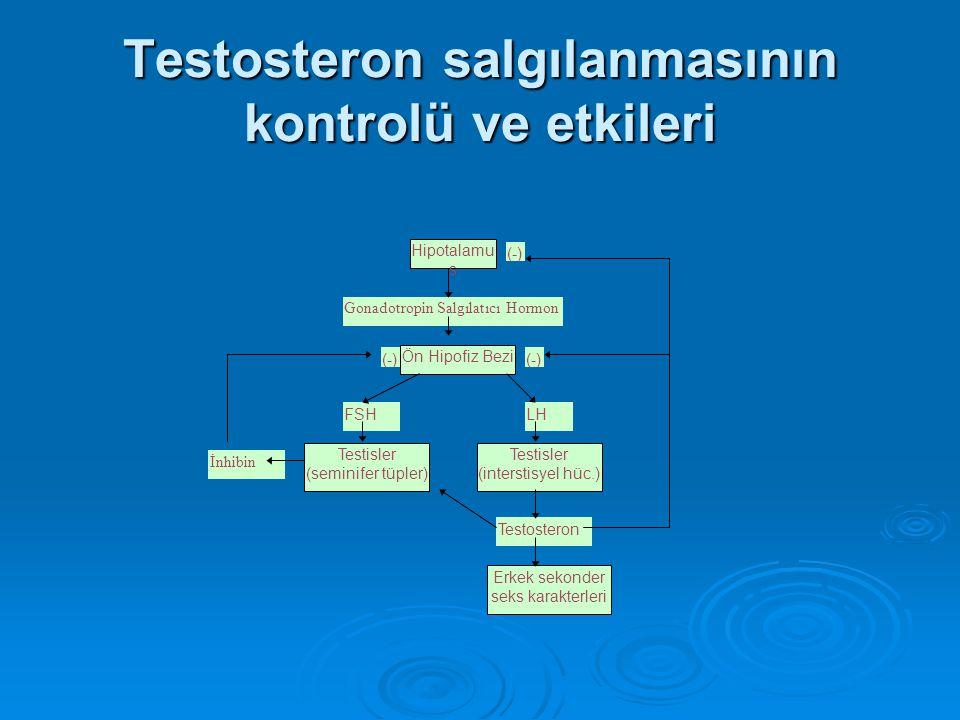 Testosteron salgılanmasının kontrolü ve etkileri Hipotalamu s Ön Hipofiz Bezi Gonadotropin Salgılatıcı Hormon FSHLH (-) Testisler (seminifer tüpler) T