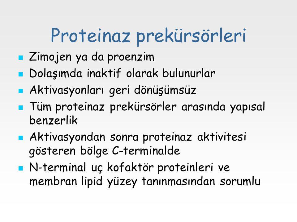 Proteinaz prekürsörleri Zimojen ya da proenzim Zimojen ya da proenzim Dolaşımda inaktif olarak bulunurlar Dolaşımda inaktif olarak bulunurlar Aktivasy