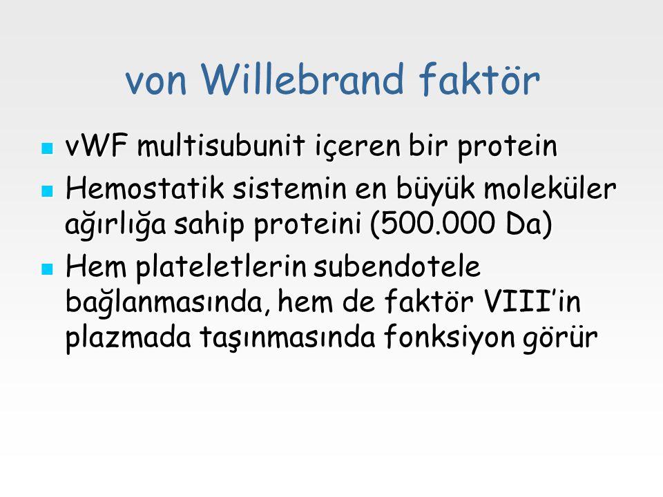 von Willebrand faktör vWF multisubunit içeren bir protein vWF multisubunit içeren bir protein Hemostatik sistemin en büyük moleküler ağırlığa sahip pr