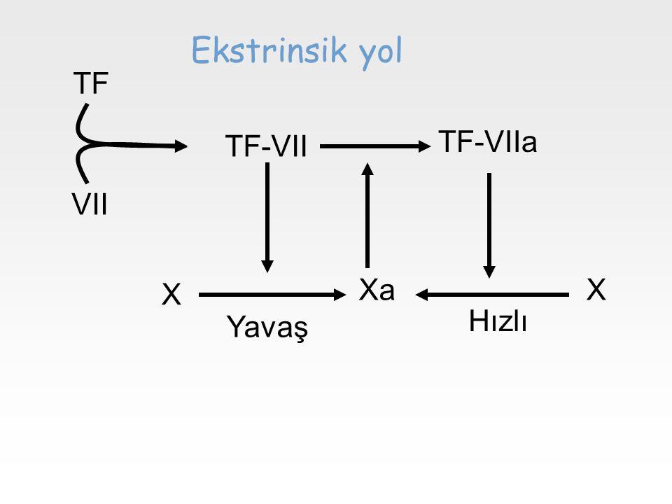 TF VII TF-VII TF-VIIa X XaX Yavaş Hızlı Ekstrinsik yol