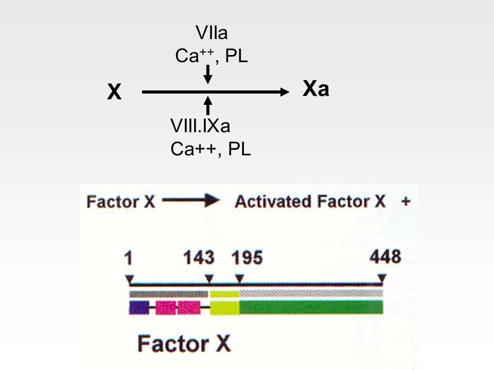 X Xa VIIa Ca ++, PL VIII.IXa Ca++, PL