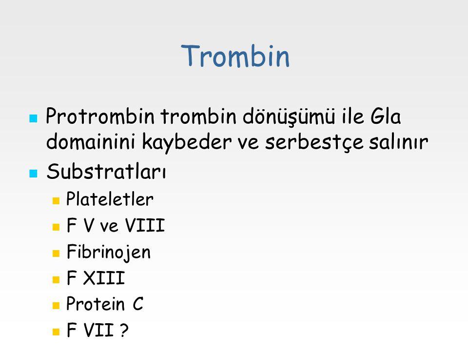 Trombin Protrombin trombin dönüşümü ile Gla domainini kaybeder ve serbestçe salınır Protrombin trombin dönüşümü ile Gla domainini kaybeder ve serbestç