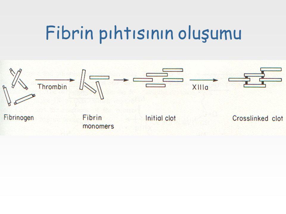 Fibrin pıhtısının oluşumu