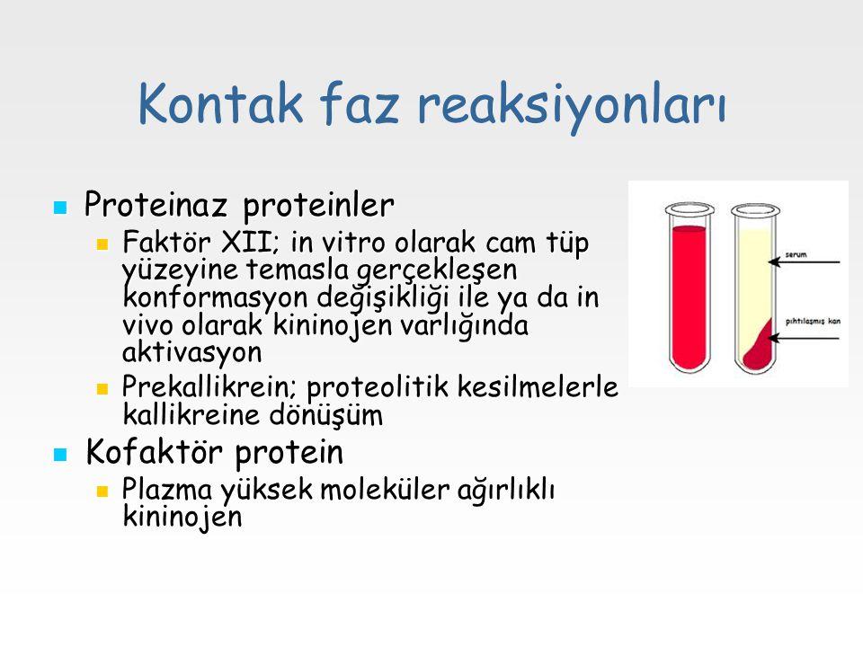 Kontak faz reaksiyonları Proteinaz proteinler Proteinaz proteinler Faktör XII; in vitro olarak cam tüp yüzeyine temasla gerçekleşen konformasyon değiş