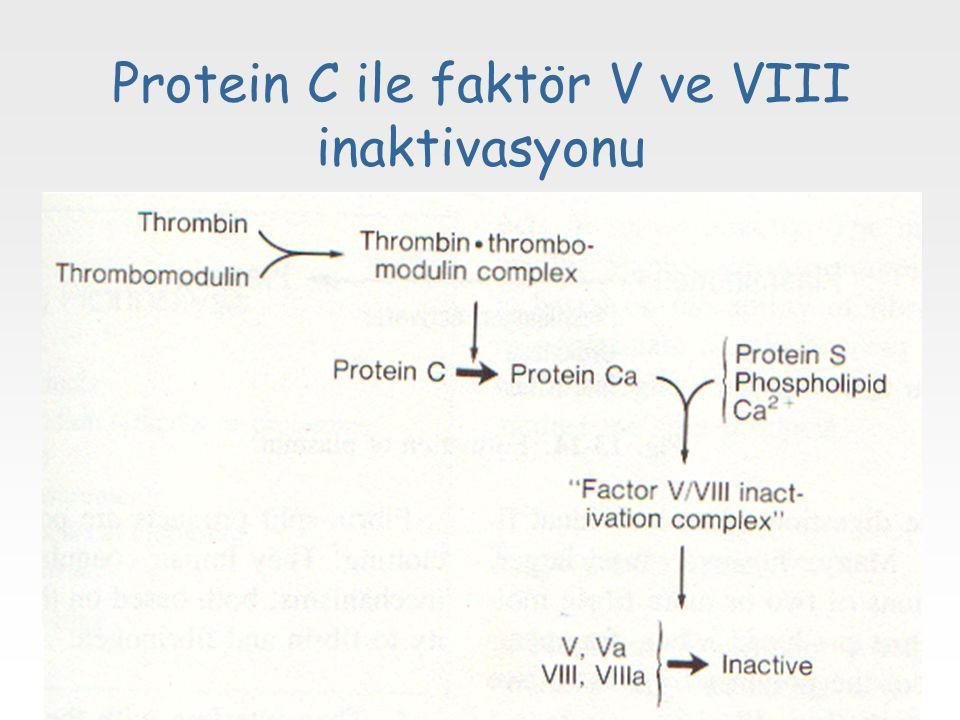 Protein C ile faktör V ve VIII inaktivasyonu