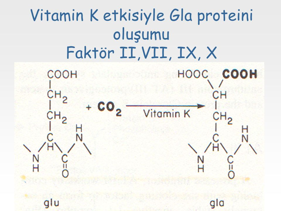 Vitamin K etkisiyle Gla proteini oluşumu Faktör II,VII, IX, X