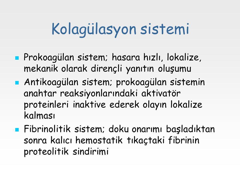 Kolagülasyon sistemi Prokoagülan sistem; hasara hızlı, lokalize, mekanik olarak dirençli yanıtın oluşumu Prokoagülan sistem; hasara hızlı, lokalize, m