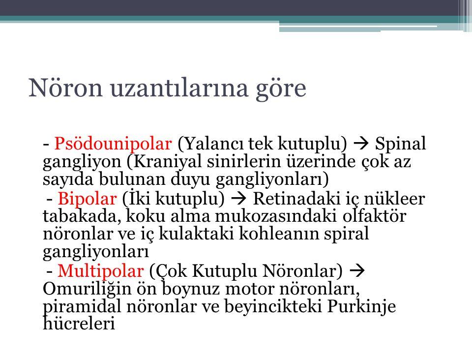 Nöron uzantılarına göre - Psödounipolar (Yalancı tek kutuplu)  Spinal gangliyon (Kraniyal sinirlerin üzerinde çok az sayıda bulunan duyu gangliyonlar