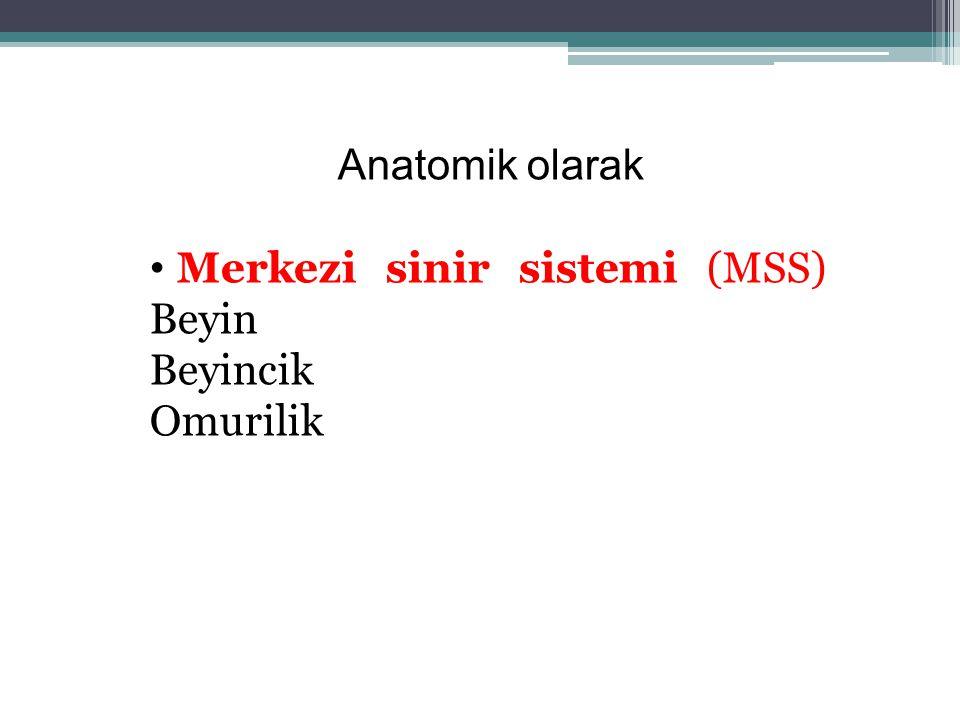 Anatomik olarak Merkezi sinir sistemi (MSS) Beyin Beyincik Omurilik