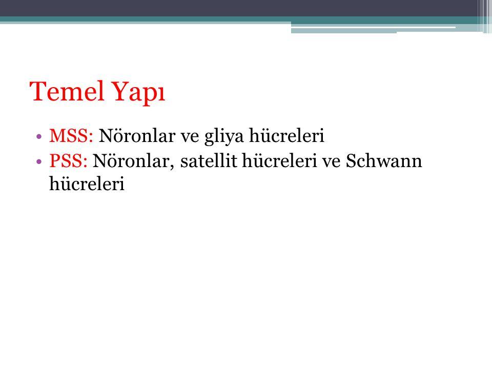 Temel Yapı MSS: Nöronlar ve gliya hücreleri PSS: Nöronlar, satellit hücreleri ve Schwann hücreleri