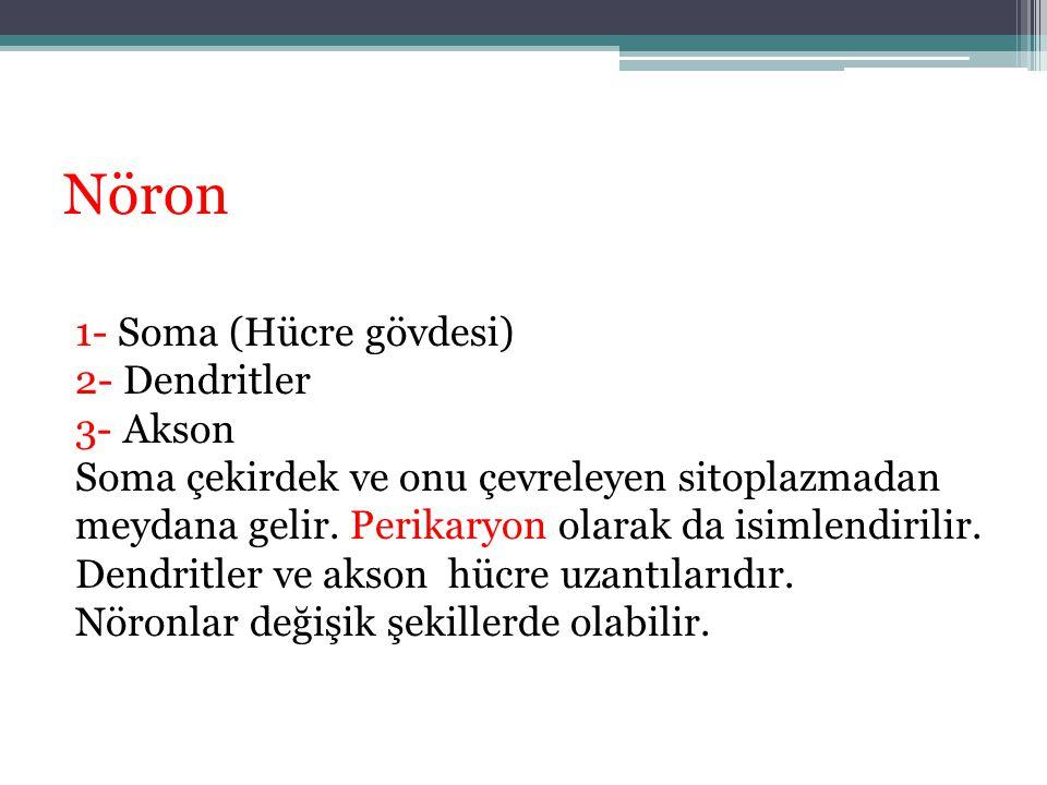 Nöron 1- Soma (Hücre gövdesi) 2- Dendritler 3- Akson Soma çekirdek ve onu çevreleyen sitoplazmadan meydana gelir. Perikaryon olarak da isimlendirilir.