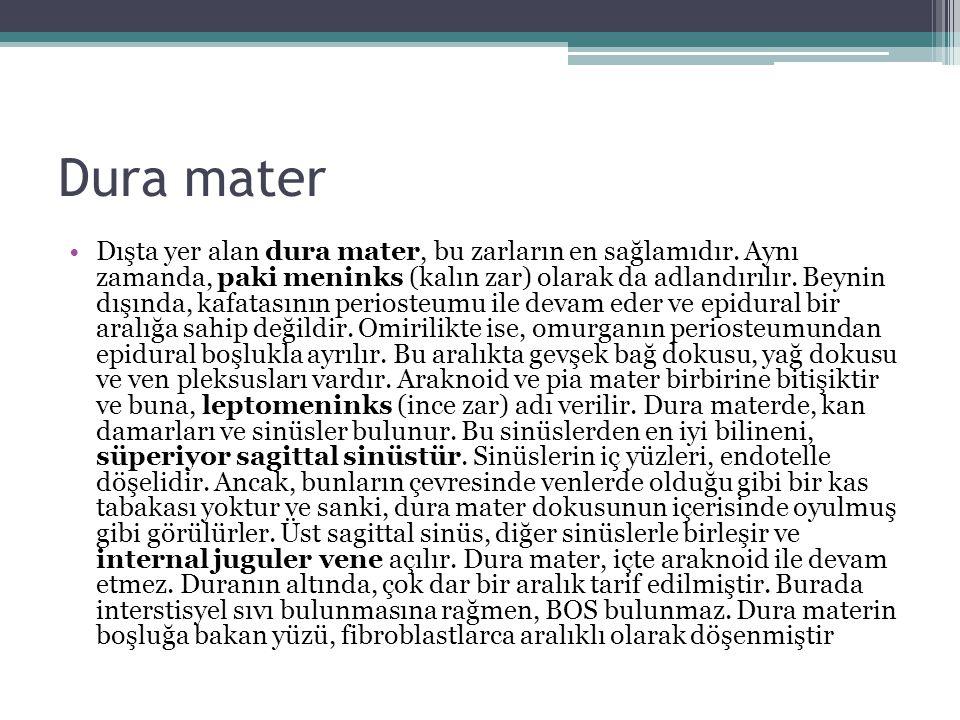 Dura mater Dışta yer alan dura mater, bu zarların en sağlamıdır. Aynı zamanda, paki meninks (kalın zar) olarak da adlandırılır. Beynin dışında, kafata