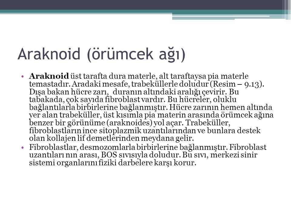Araknoid (örümcek ağı) Araknoid üst tarafta dura materle, alt taraftaysa pia materle temastadır. Aradaki mesafe, trabeküllerle doludur (Resim – 9.13).