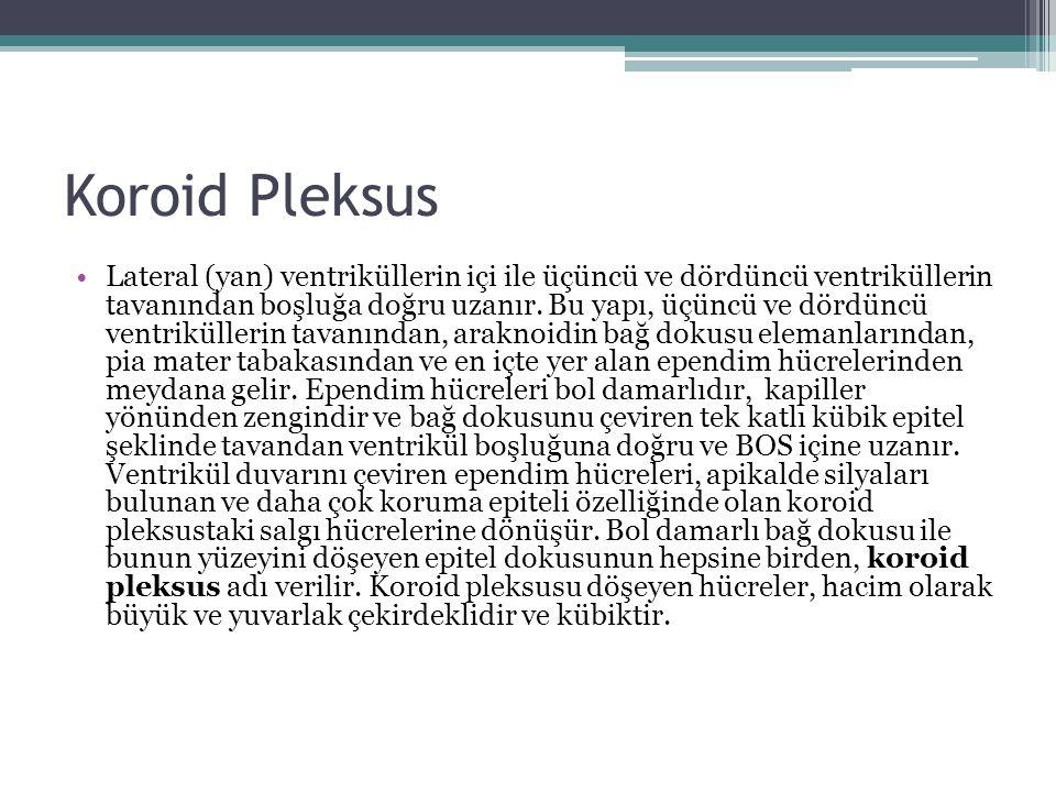 Koroid Pleksus Lateral (yan) ventriküllerin içi ile üçüncü ve dördüncü ventriküllerin tavanından boşluğa doğru uzanır. Bu yapı, üçüncü ve dördüncü ven