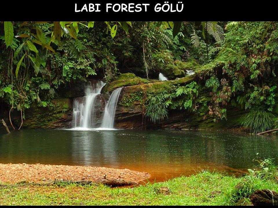 LABI FOREST GÖLÜ