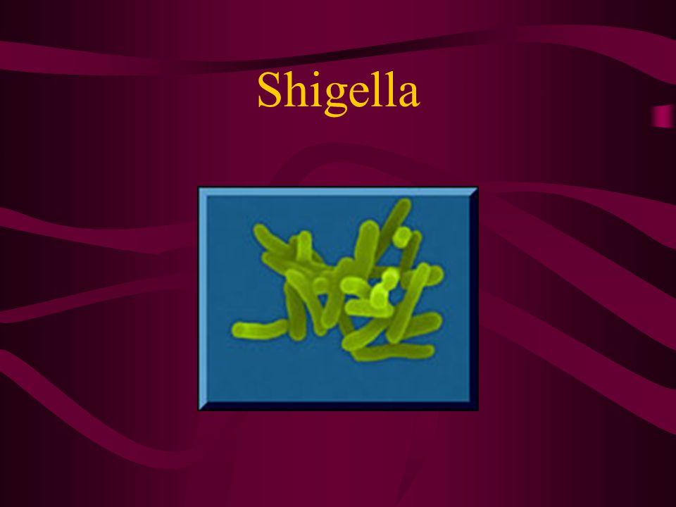 S.dysenteria daha ağır enfeksiyon tablosuna neden olur.