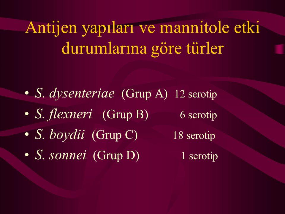 Antijen yapıları ve mannitole etki durumlarına göre türler S. dysenteriae (Grup A) 12 serotip S. flexneri (Grup B) 6 serotip S. boydii (Grup C) 18 ser