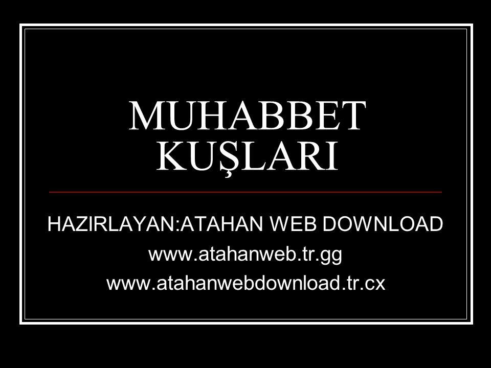 MUHABBET KUŞLARI HAZIRLAYAN:ATAHAN WEB DOWNLOAD www.atahanweb.tr.gg www.atahanwebdownload.tr.cx