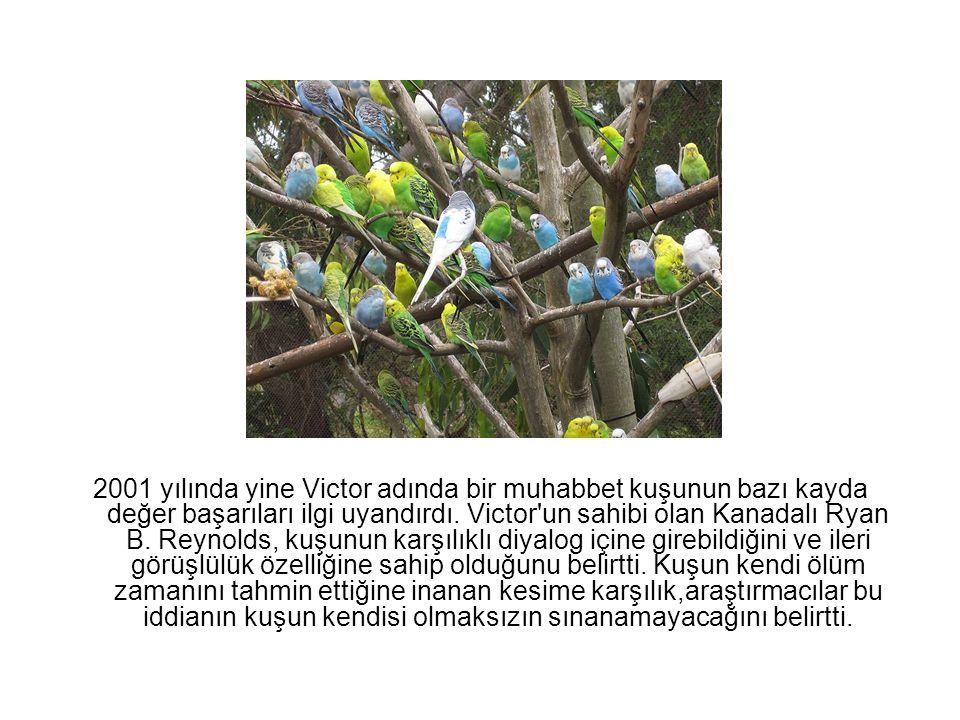 2001 yılında yine Victor adında bir muhabbet kuşunun bazı kayda değer başarıları ilgi uyandırdı. Victor'un sahibi olan Kanadalı Ryan B. Reynolds, kuşu