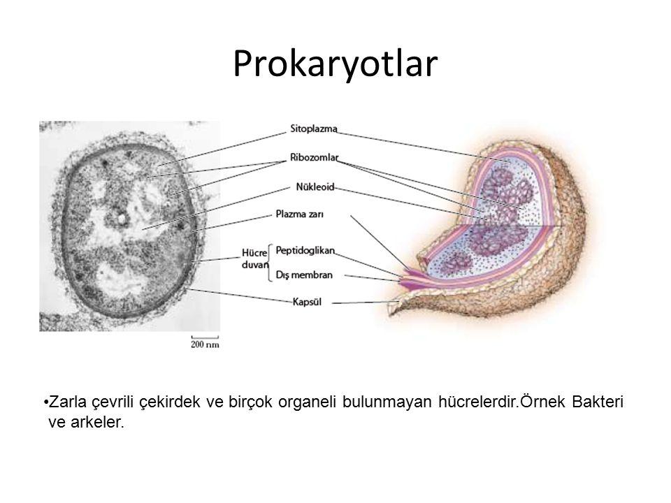 Prokaryotlar Zarla çevrili çekirdek ve birçok organeli bulunmayan hücrelerdir.Örnek Bakteri ve arkeler.