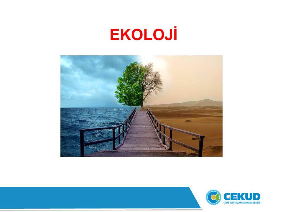 EKOLOJİ NEDİR.Ekoloji, canlıların birbirleri ve çevreleriyle ilişkilerini inceleyen bilim dalıdır.