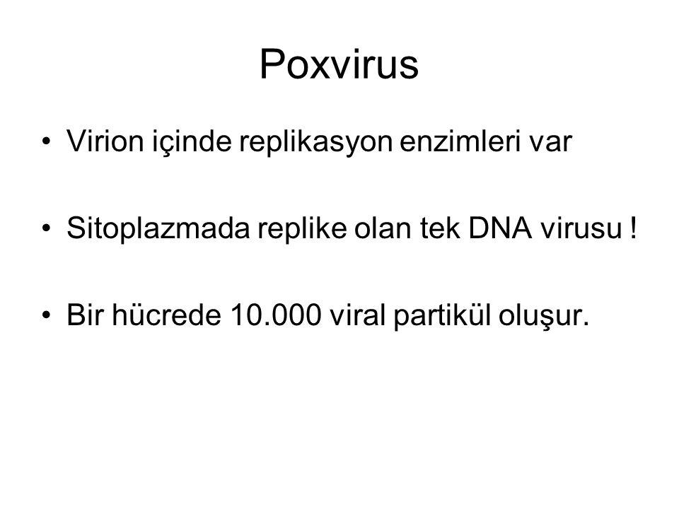 Poxvirus Virion içinde replikasyon enzimleri var Sitoplazmada replike olan tek DNA virusu .