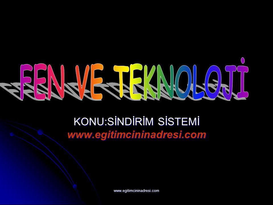 KONU:SİNDİRİM SİSTEMİ www.egitimcininadresi.com www.egitimcininadresi.com