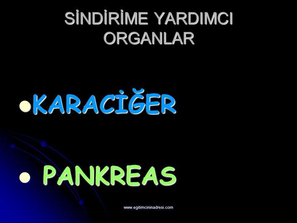 SİNDİRİME YARDIMCI ORGANLAR KARACİĞER KARACİĞER PANKREAS PANKREAS www.egitimcininadresi.com
