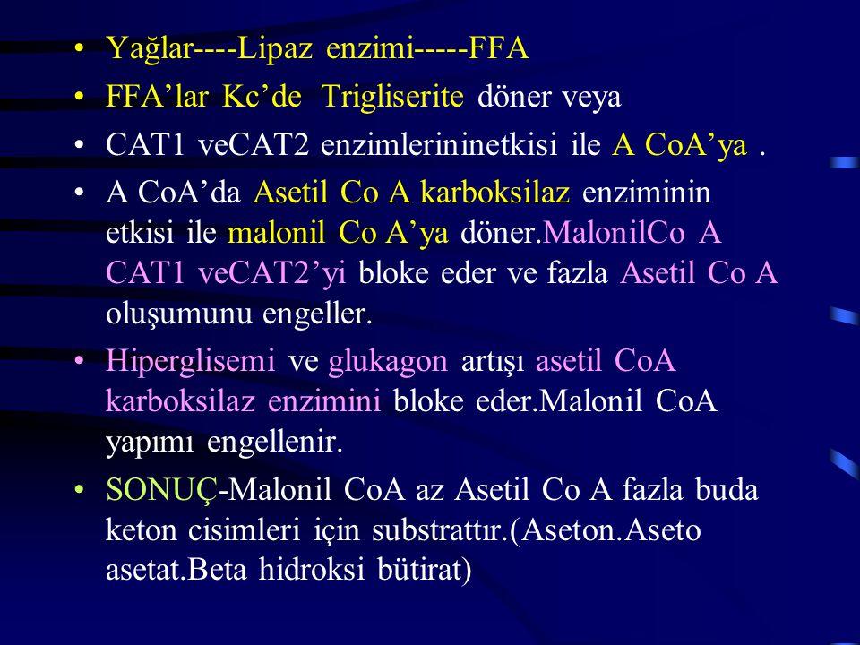 Yağlar----Lipaz enzimi-----FFA FFA'lar Kc'de Trigliserite döner veya CAT1 veCAT2 enzimlerininetkisi ile A CoA'ya.
