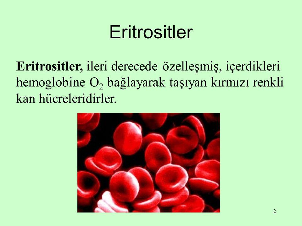 2 Eritrositler Eritrositler, ileri derecede özelleşmiş, içerdikleri hemoglobine O 2 bağlayarak taşıyan kırmızı renkli kan hücreleridirler.