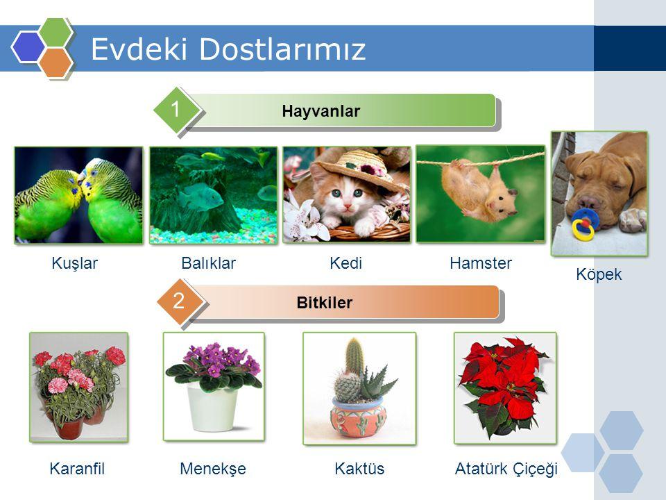 Evdeki Dostlarımız Hayvanlar 1 Bitkiler 2 KuşlarBalıklarKediHamster Köpek KaranfilMenekşeKaktüsAtatürk Çiçeği