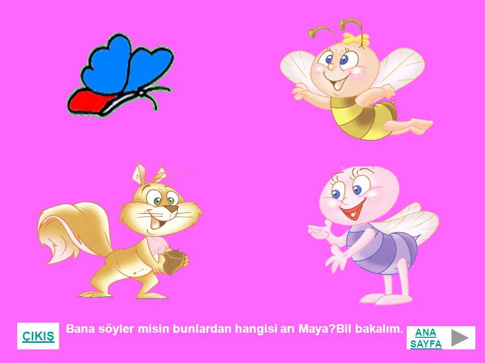 Bana söyler misin bunlardan hangisi arı Maya?Bil bakalım. ÇIKIŞ ANA SAYFA