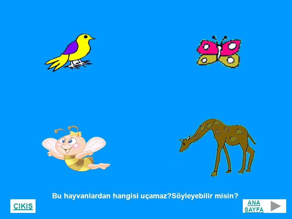 Bu hayvanlardan hangisi uçamaz?Söyleyebilir misin? ANA SAYFA ÇIKIŞ