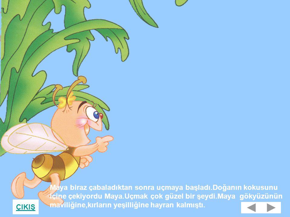 Maya biraz çabaladıktan sonra uçmaya başladı.Doğanın kokusunu içine çekiyordu Maya.Uçmak çok güzel bir şeydi.Maya gökyüzünün maviliğine,kırların yeşilliğine hayran kalmıştı.