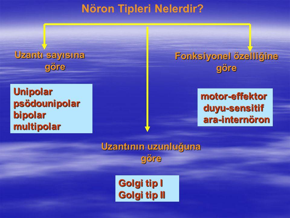 Uzantı sayısına göre Nöron Tipleri Nelerdir? Uzantının uzunluğuna göre Fonksiyonel özelliğine göre Unipolarpsödounipolarbipolarmultipolar motor-effekt