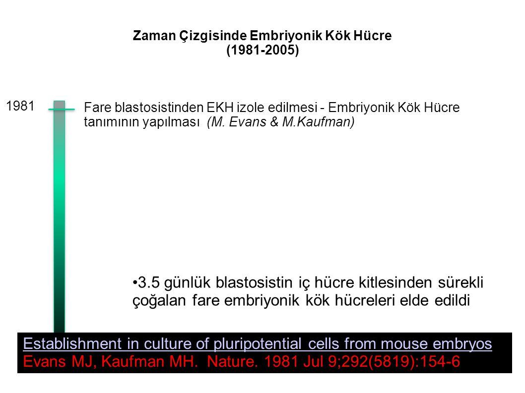 Zaman Çizgisinde Embriyonik Kök Hücre (1981-2005) Fare blastosistinden EKH izole edilmesi - Embriyonik Kök Hücre tanımının yapılması (M. Evans & M.Kau