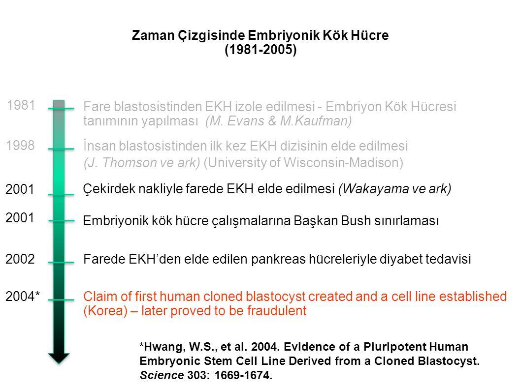 Zaman Çizgisinde Embriyonik Kök Hücre (1981-2005) Fare blastosistinden EKH izole edilmesi - Embriyon Kök Hücresi tanımının yapılması (M. Evans & M.Kau