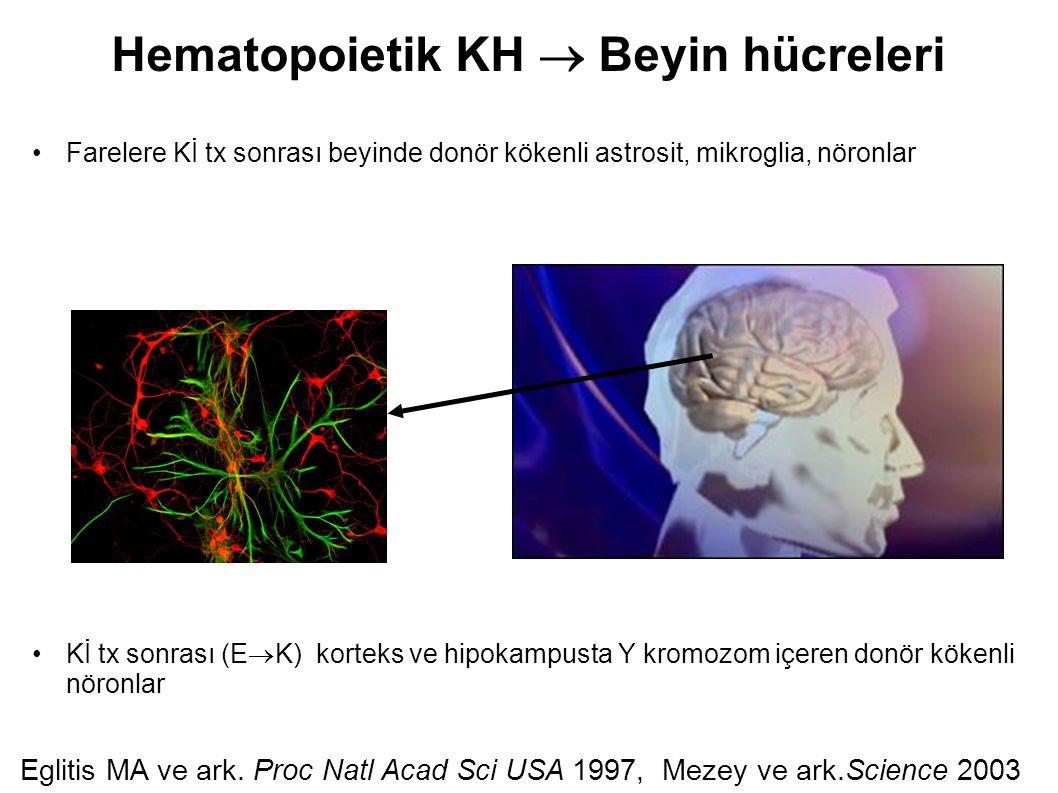 Hematopoietik KH  Beyin hücreleri Farelere Kİ tx sonrası beyinde donör kökenli astrosit, mikroglia, nöronlar Kİ tx sonrası (E  K) korteks ve hipokam