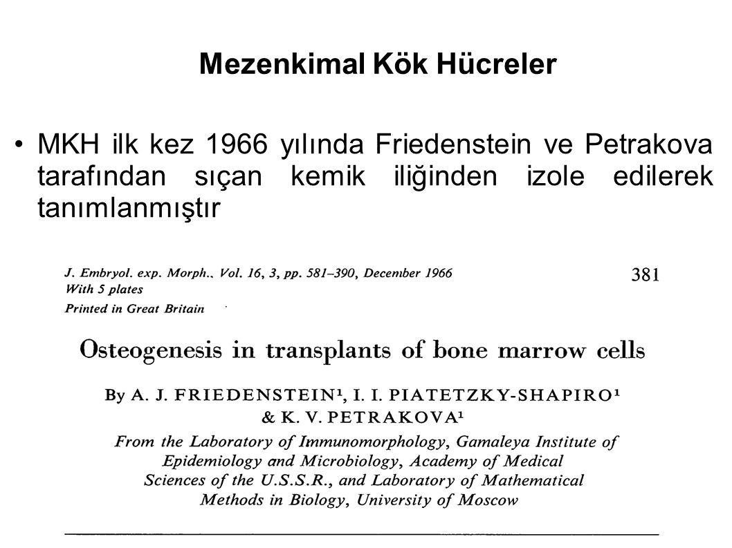 Mezenkimal Kök Hücreler MKH ilk kez 1966 yılında Friedenstein ve Petrakova tarafından sıçan kemik iliğinden izole edilerek tanımlanmıştır