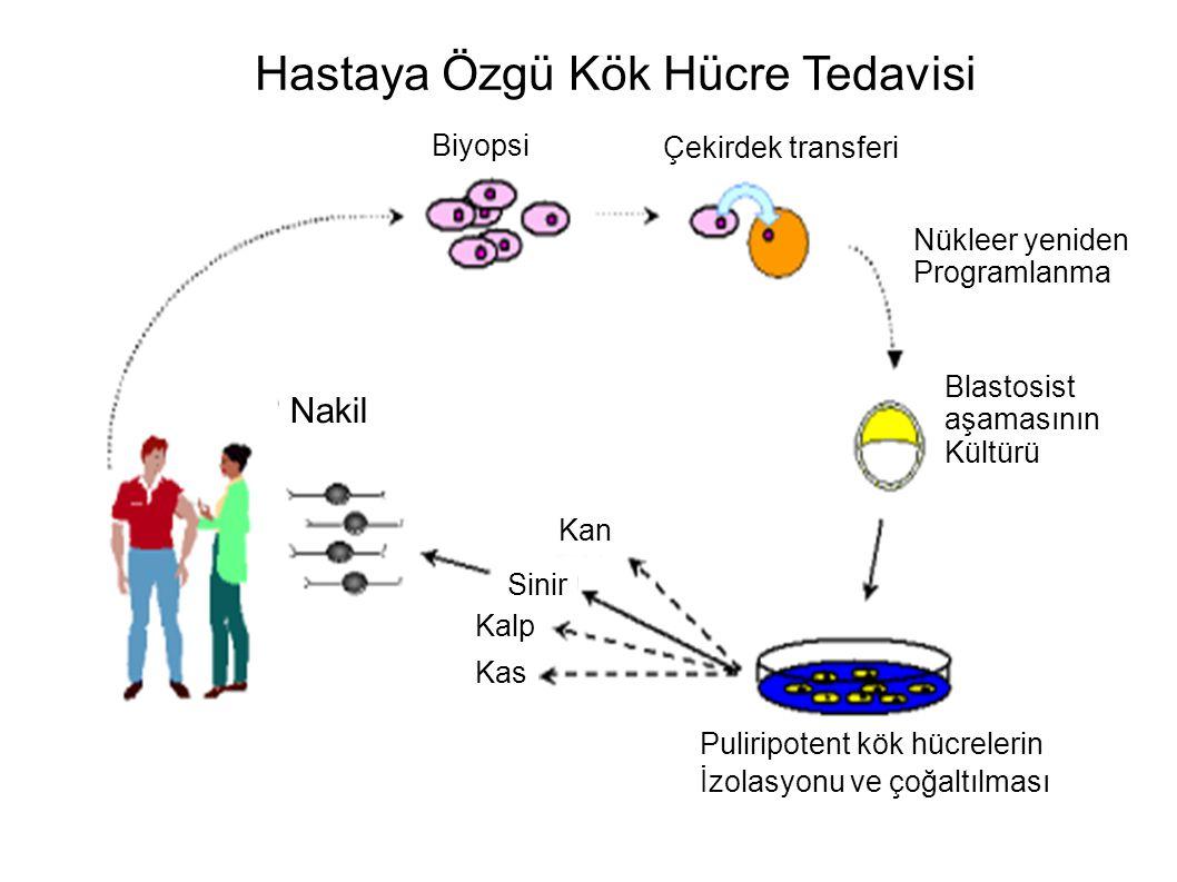 Hastaya Özgü Kök Hücre Tedavisi Biyopsi Çekirdek transferi Nükleer yeniden Programlanma Blastosist aşamasının Kültürü Nakil Kan Kalp Sinir Kas Pulirip