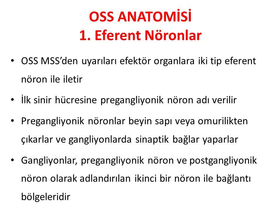 OSS ANATOMİSİ 1. Eferent Nöronlar OSS MSS'den uyarıları efektör organlara iki tip eferent nöron ile iletir İlk sinir hücresine pregangliyonik nöron ad