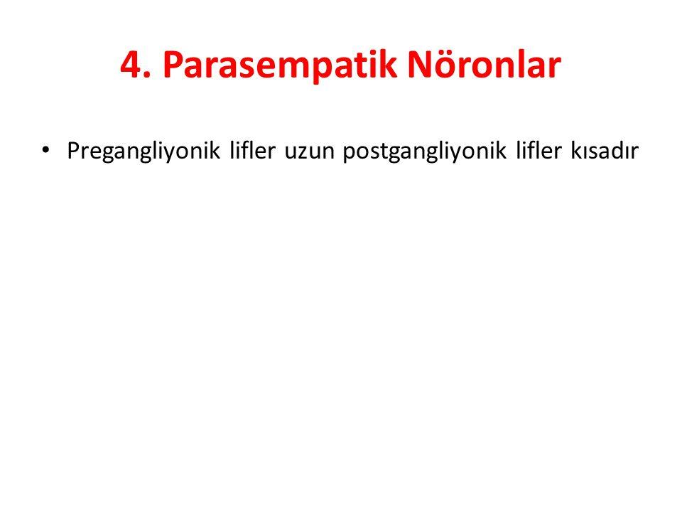 4. Parasempatik Nöronlar Pregangliyonik lifler uzun postgangliyonik lifler kısadır