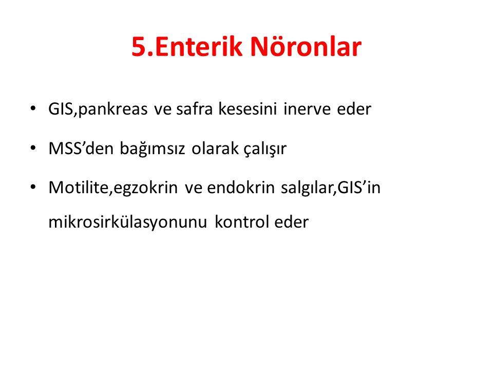 5.Enterik Nöronlar GIS,pankreas ve safra kesesini inerve eder MSS'den bağımsız olarak çalışır Motilite,egzokrin ve endokrin salgılar,GIS'in mikrosirkü