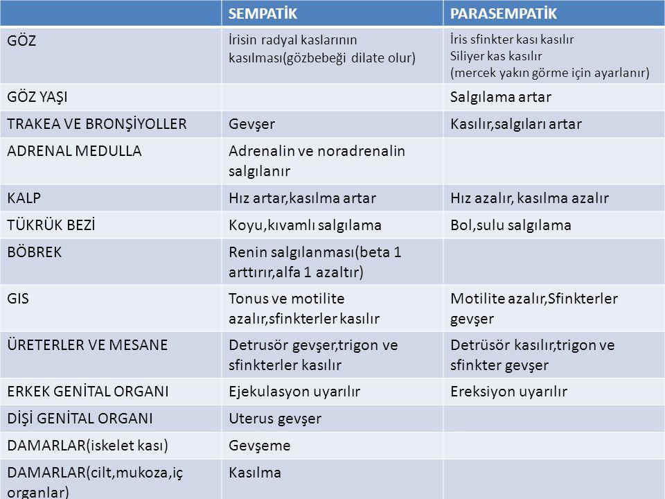 SEMPATİKPARASEMPATİK GÖZ İrisin radyal kaslarının kasılması(gözbebeği dilate olur) İris sfinkter kası kasılır Siliyer kas kasılır (mercek yakın görme