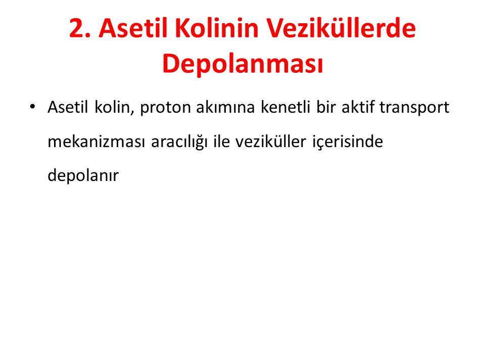 2. Asetil Kolinin Veziküllerde Depolanması Asetil kolin, proton akımına kenetli bir aktif transport mekanizması aracılığı ile veziküller içerisinde de