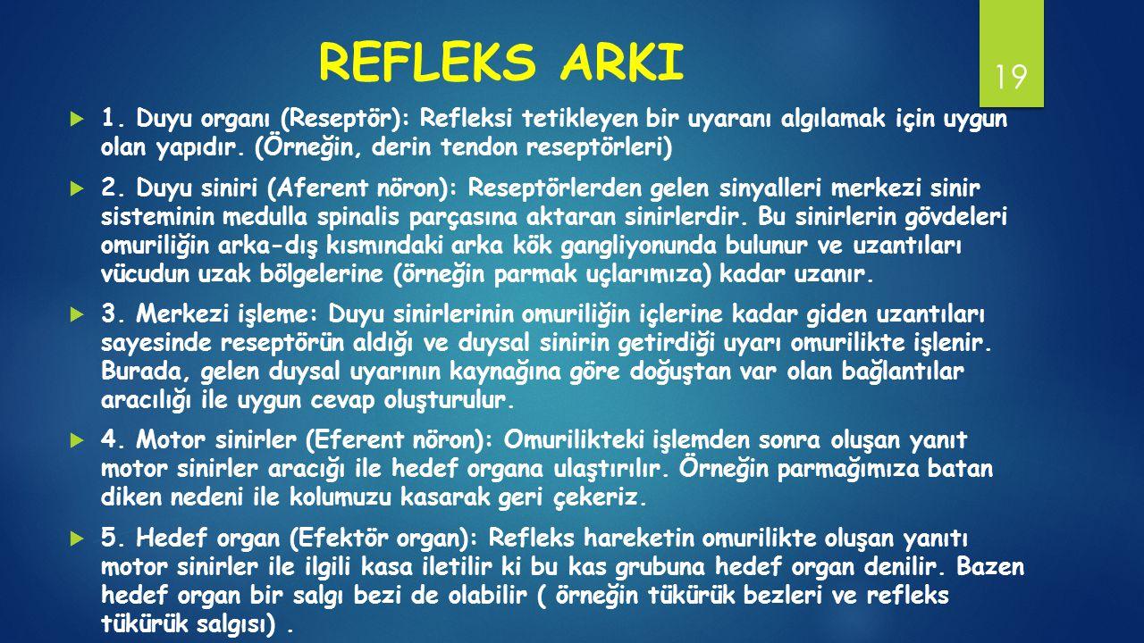 REFLEKS ARKI  1.