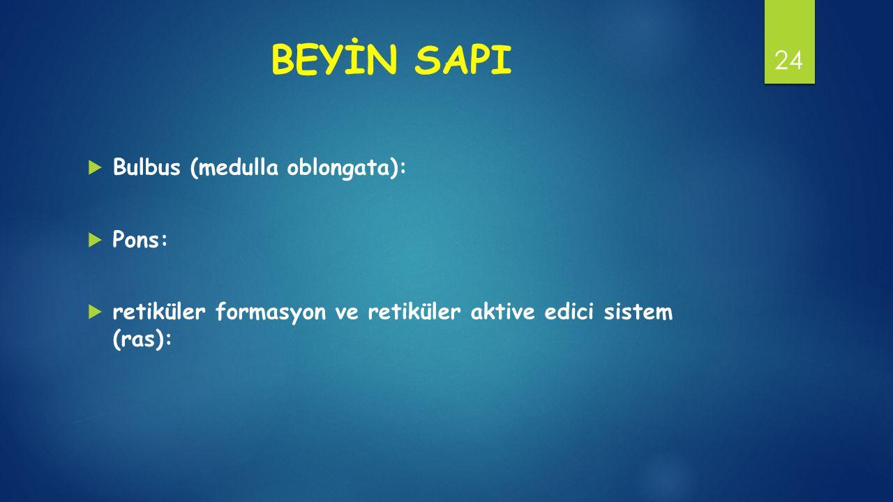 BEYİN SAPI  Bulbus (medulla oblongata):  Pons:  retiküler formasyon ve retiküler aktive edici sistem (ras): 24
