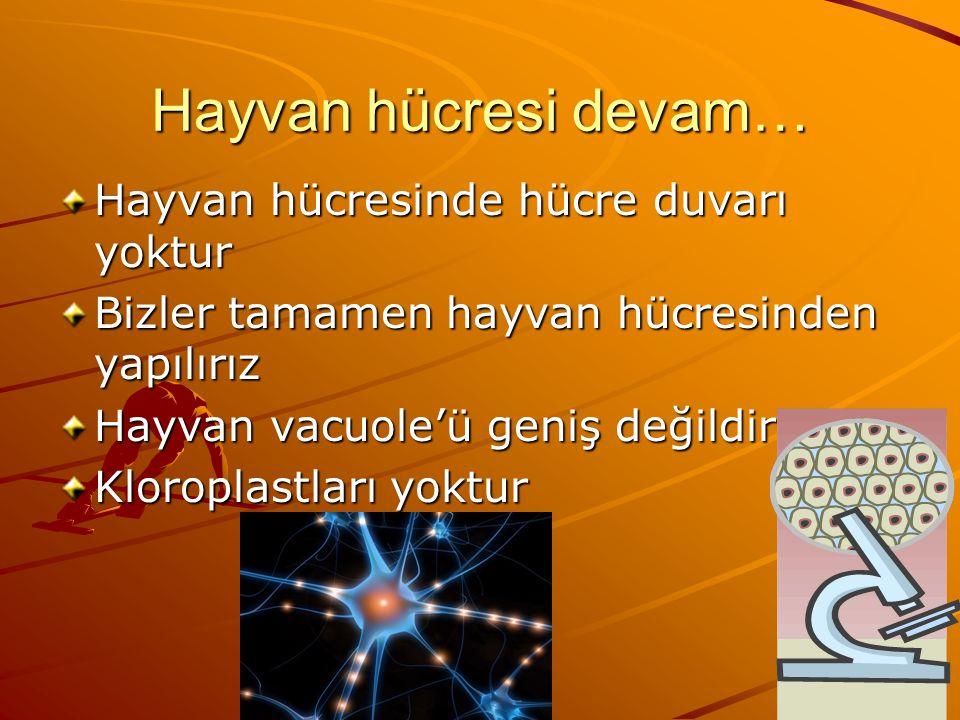 Hayvan Hücresi Kendi besinlerini kendileri yapamaz ve besin almadan yaşayamaz Fotosentez yapamazlar Hayvan hücreleri daha yuvarlak biçimlidir Hayvan hücreleri lizozoma sahiptir Hayvan hücreleri şeker yapamaz Hayvan hücreleri enerji üretmek için mitokondriyi kullanır