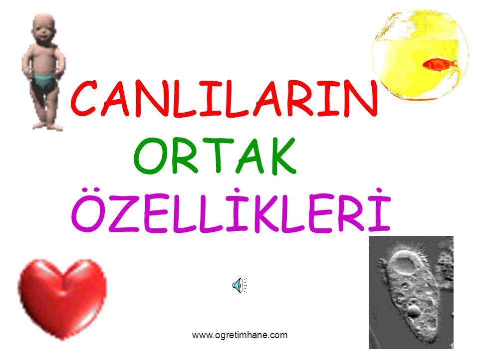 www.ogretimhane.com CANLILARIN ORTAK ÖZELLİKLERİ